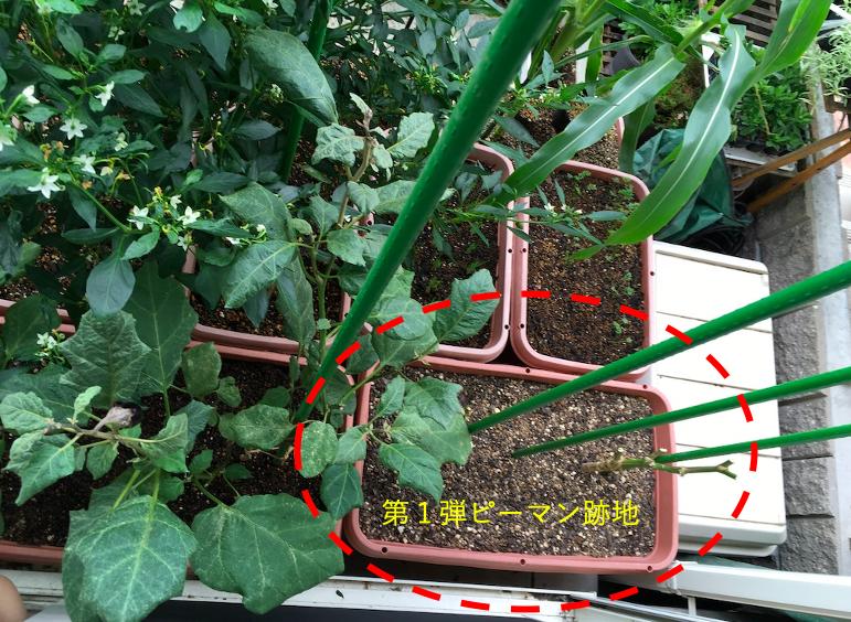 f:id:Mt_vegetable:20200920154513p:plain