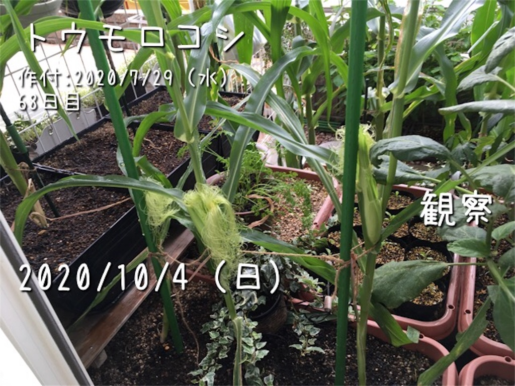 f:id:Mt_vegetable:20201007165026j:image