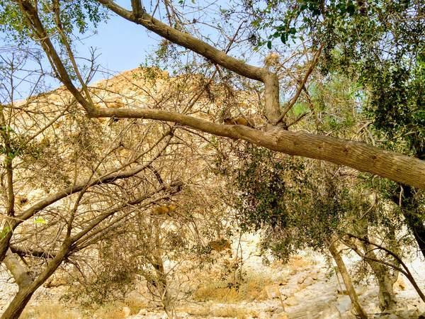木によじ登っている小動物