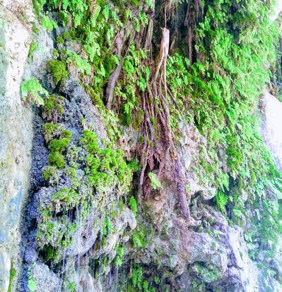 岩壁に生い茂る苔