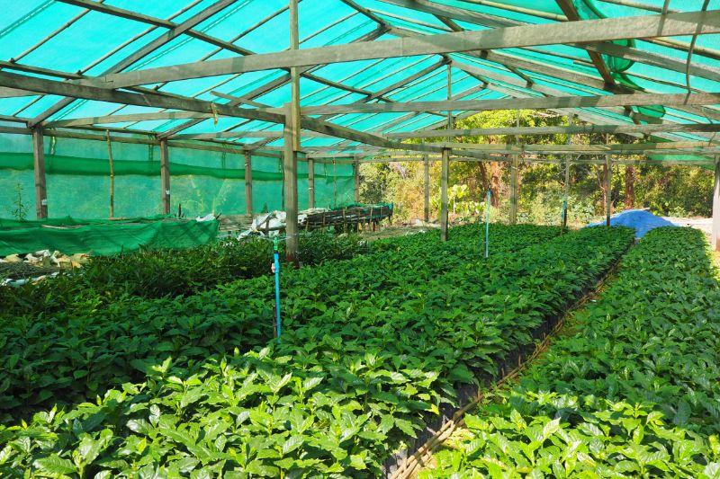 f:id:Myanmarcoffee:20200715123431j:plain