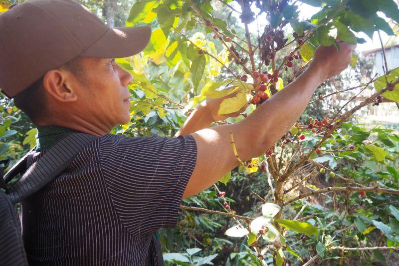 f:id:Myanmarcoffee:20200715123936j:plain