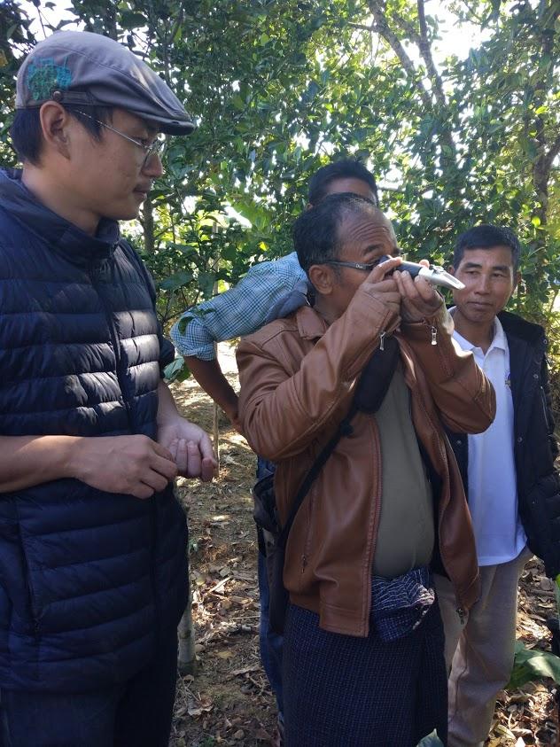 f:id:Myanmarcoffee:20200910124034j:plain