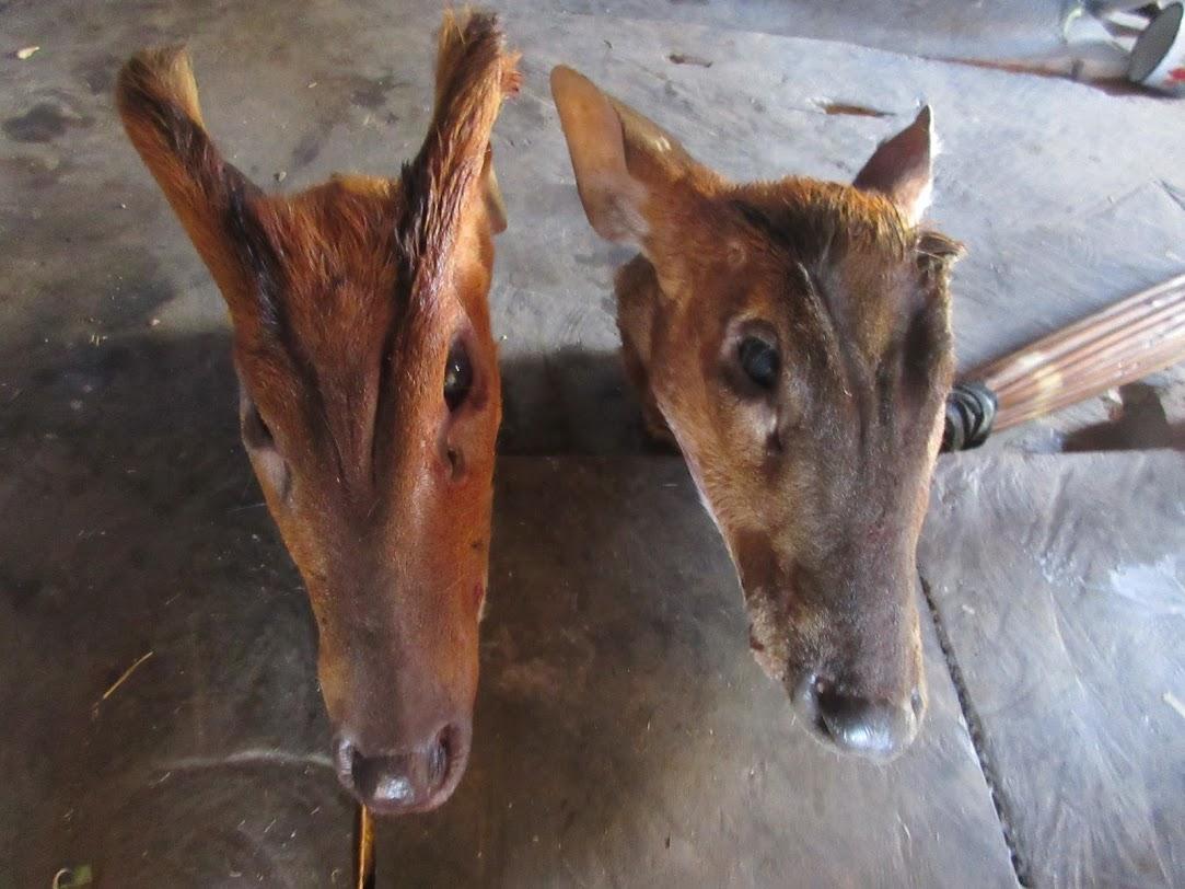 f:id:Myanmarcoffee:20201218093429j:plain