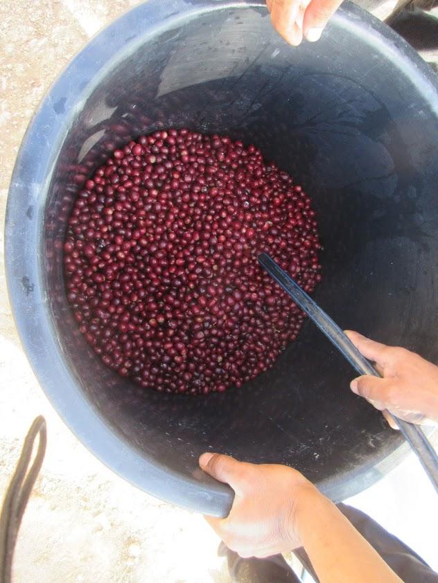 f:id:Myanmarcoffee:20210121170201j:plain