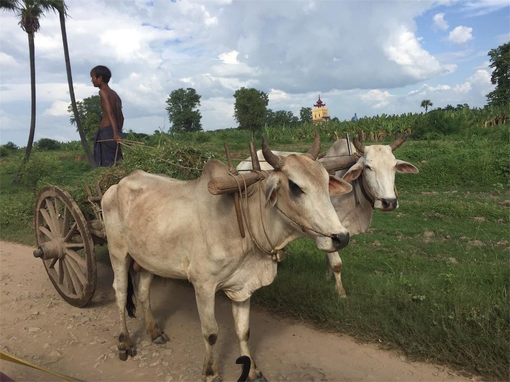 f:id:Myanmarshanlife:20161027000057j:image