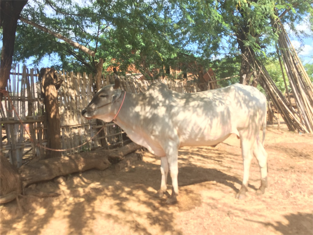 f:id:Myanmarshanlife:20161102013848j:image
