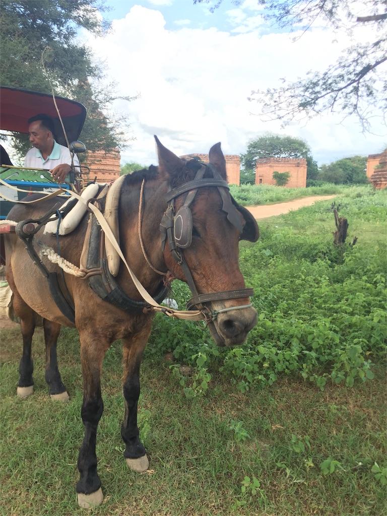 f:id:Myanmarshanlife:20161110201239j:image