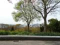 大阪泉団地公園の春