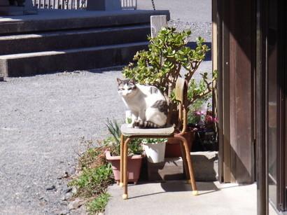 猫ににらまれる@室戸青年大師像近辺