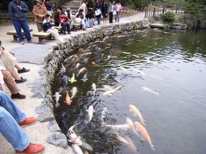 鯉と人が集まる池の岸@栗林公園