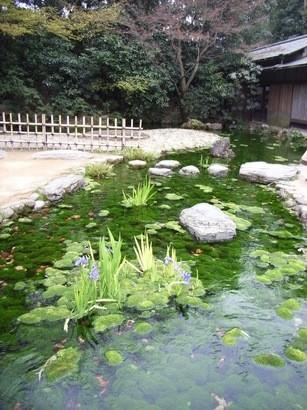 鮮やかな緑色の水路@栗林公園