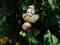 20160315多摩動物園の蝶
