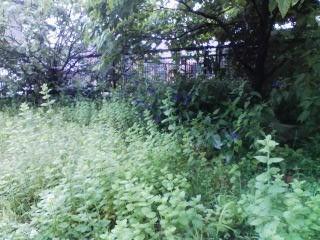 f:id:NCOM:20110612112124j:image