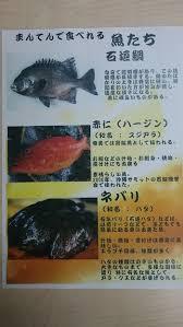 寿司ネタ・奄美特有の魚