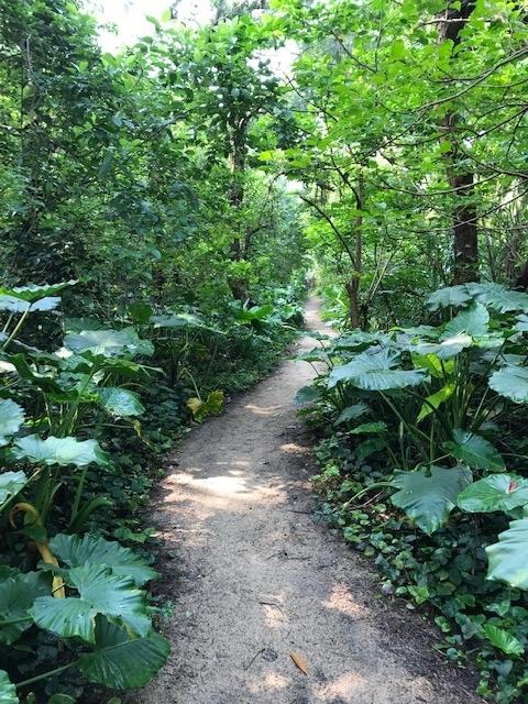 奄美大島・ビーチまでのジャングル道