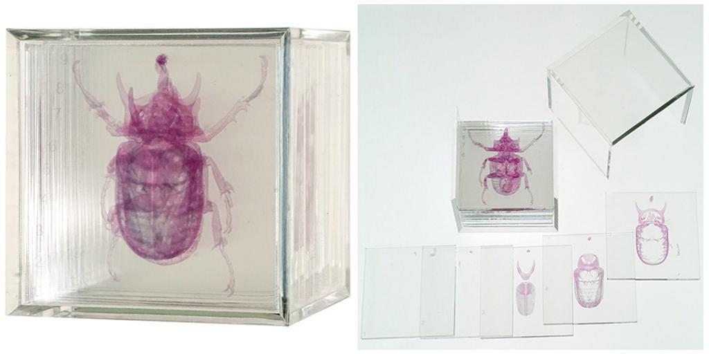 3D積層フィギュア ゴホンツノカブトムシが当たる!