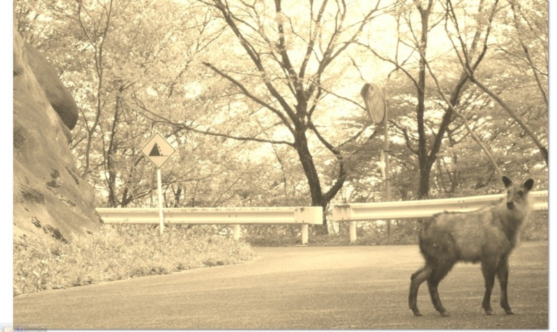 f:id:Nakamuu:20120526010021j:plain
