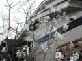 2011/04/12/ジューンベリー1