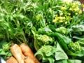 2011/04/12/野菜