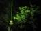 2011/04/22/神社の木