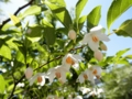 2011/05/15/街路樹