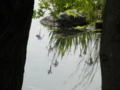 2011/05/15/水面に映る花