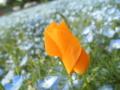 2011/05/15/ネモフィラ脇の花