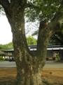 2011/05/15/木