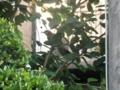 2011/06/22/ヒヨドリ