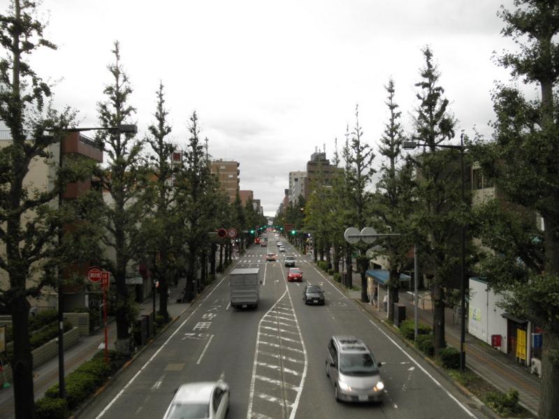 2011/09/22/イチョウ並木