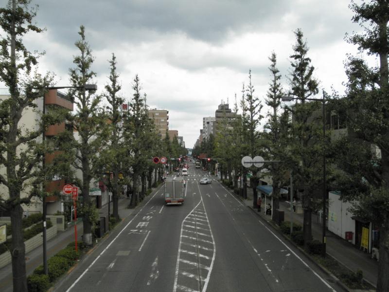 2011/09/25/イチョウ並木