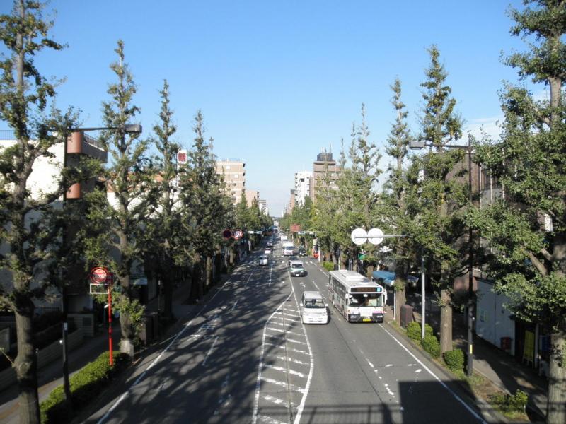 2011/09/27/イチョウ並木