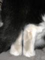 2011/10/14/ネコ2