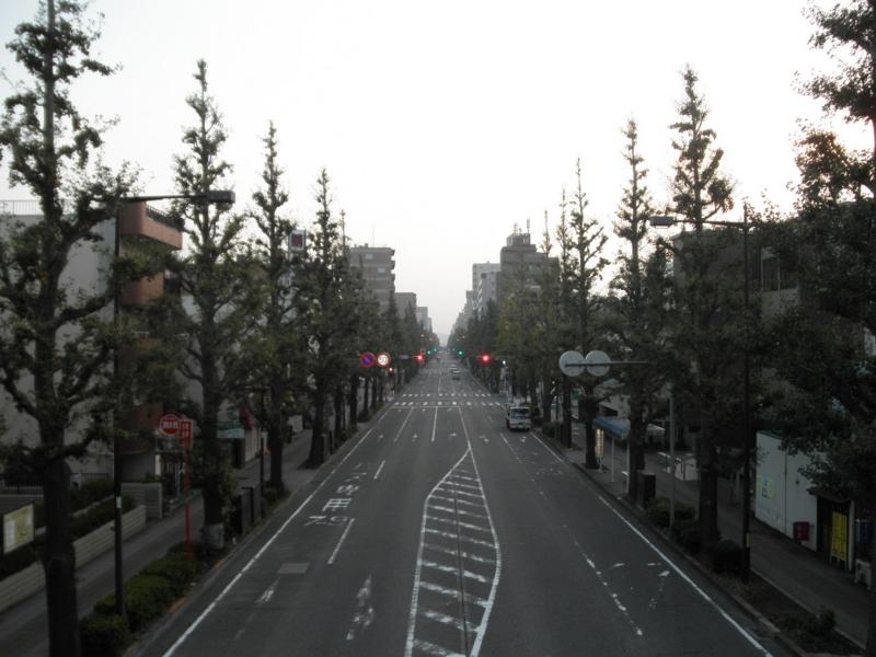 2011/10/14/イチョウ並木