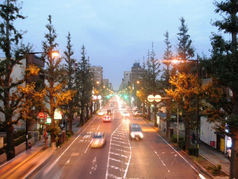 2011/10/17/イチョウ並木