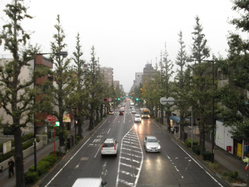 2011/10/21/イチョウ並木