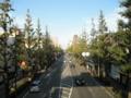 2011/10/23/イチョウ並木