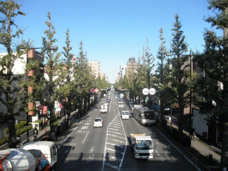 2011/10/26/イチョウ並木