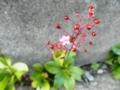 2011/10/31/ハゼラン