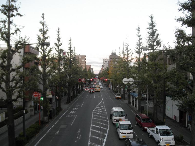 2011/10/31/イチョウ並木