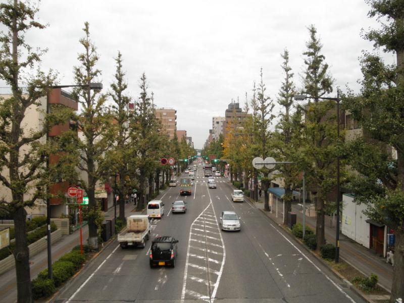 2011/11/09/イチョウ並木