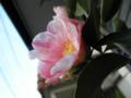 2012/01/12/姫侘助