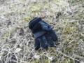 2012/01/12/手袋2