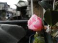 2012/01/20/姫侘助
