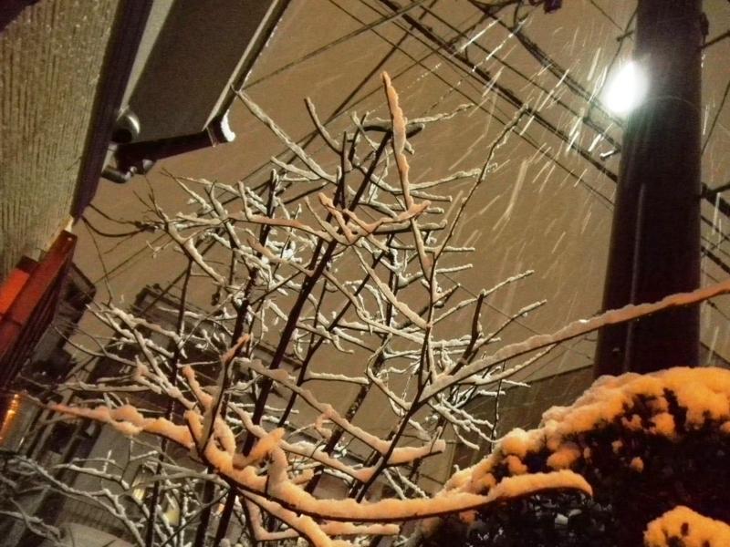 2012/01/23/雪