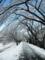 2012/01/24/雪2