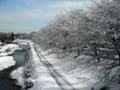 2012/01/24/雪3