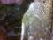 2012/01/29/睡蓮鉢