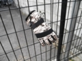 2012/02/02/手袋